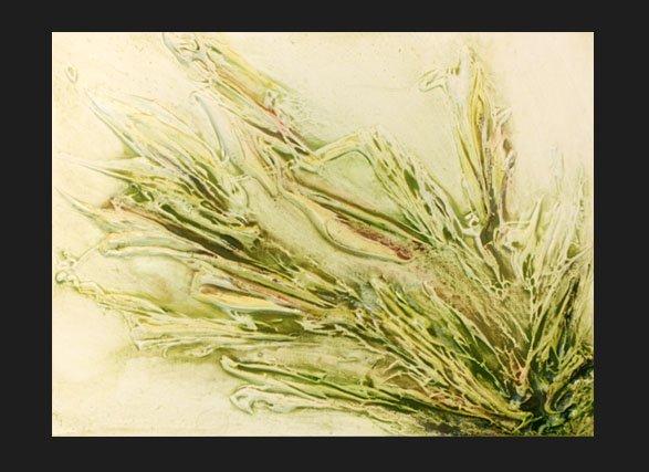 Pennisetum  copyright Sarah Soward.
