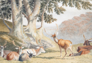 Attributed to Robert Hills, (British, 1769-1844),  Deer in a park