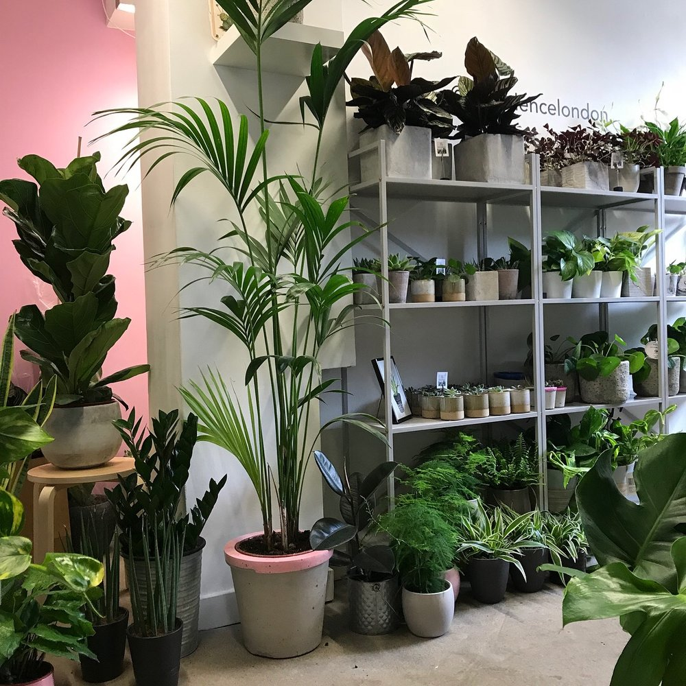 With so much choice make sure that you ask your local friendly plant shop for advice before buying so you know you can keep your plant alive and well.