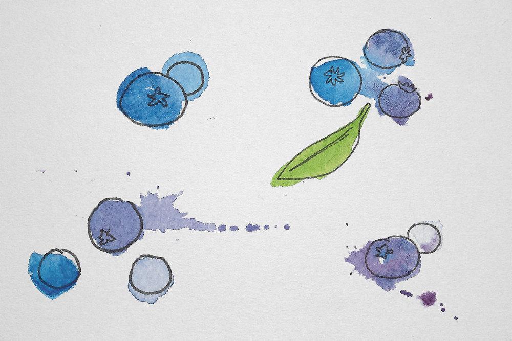 illustration slide_blueberries.jpg