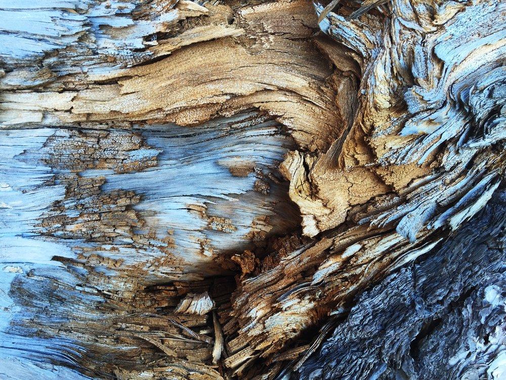 hartcoherentie - hout.jpg