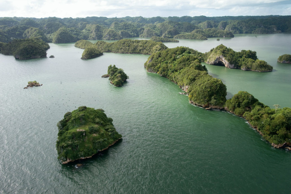 7.   Los Haitises National Park:  Explore the protected forest of Los Haitises and you will find unique birds and fauna, and many native and migratory species found nowhere else in the country. This park is a truly unique experience when travelling to the Dominican Republic.
