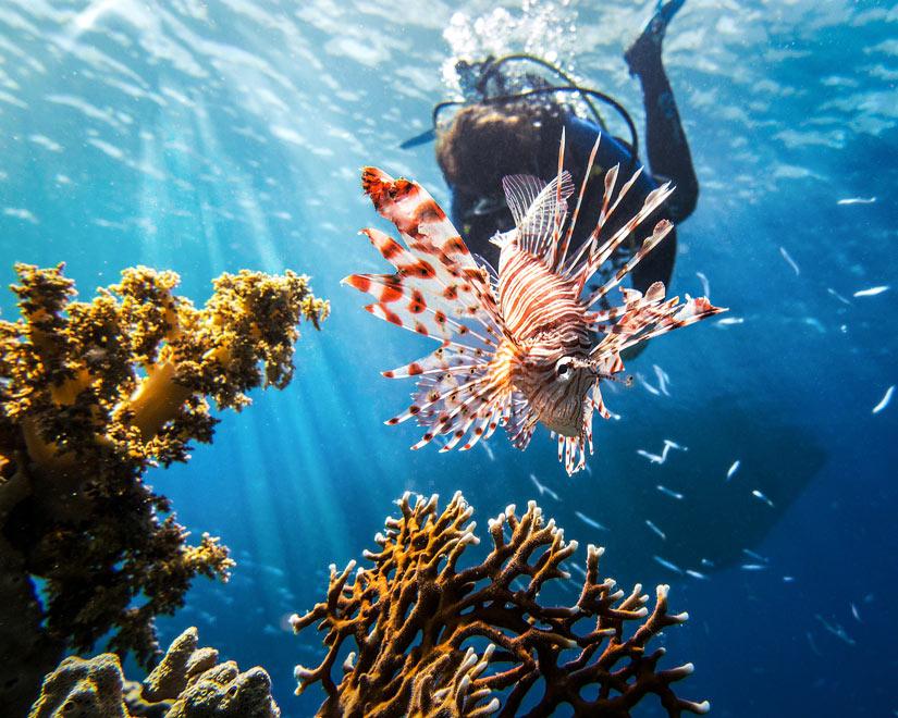 Lionfish-Hunting.jpg