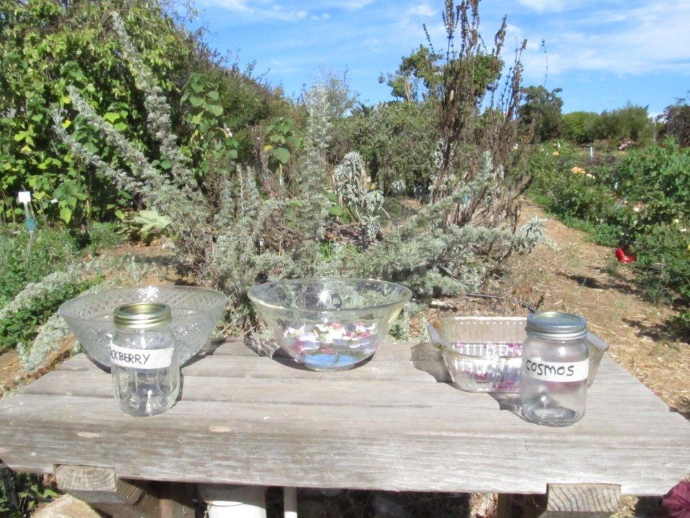 Making flower essences in the garden