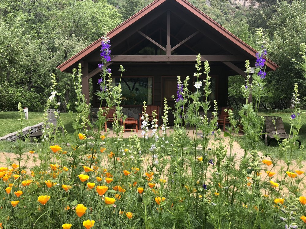Cabin Georgiana guests enjoy larkspur and poppy displays in June