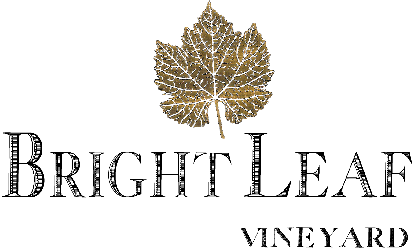 Bright Leaf Vineyard