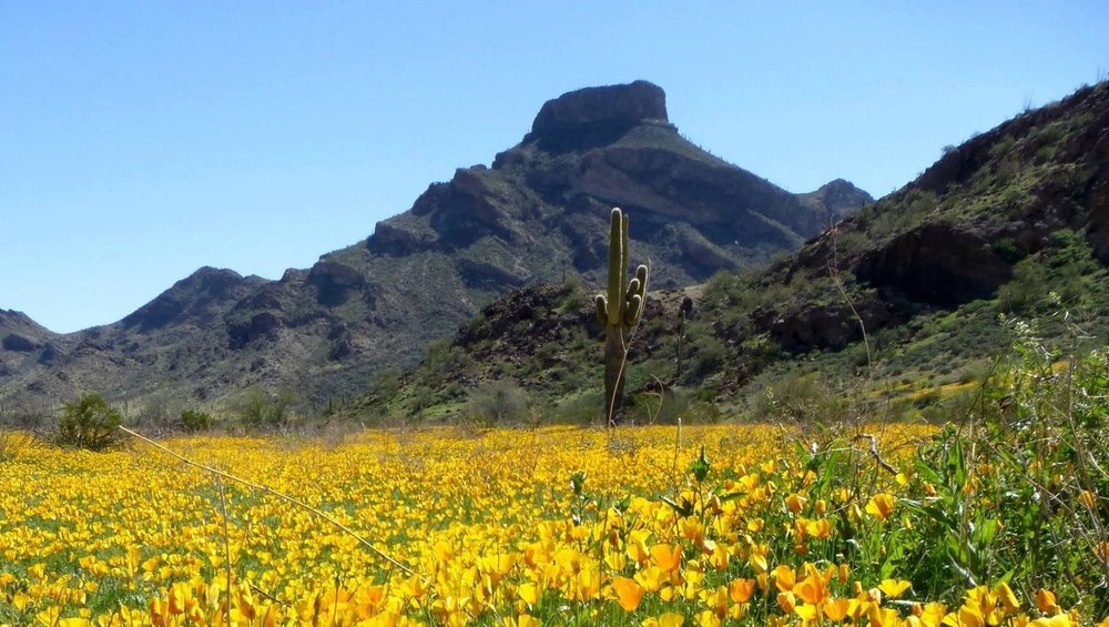 Ajo.SonoranCCFacebook.jpg
