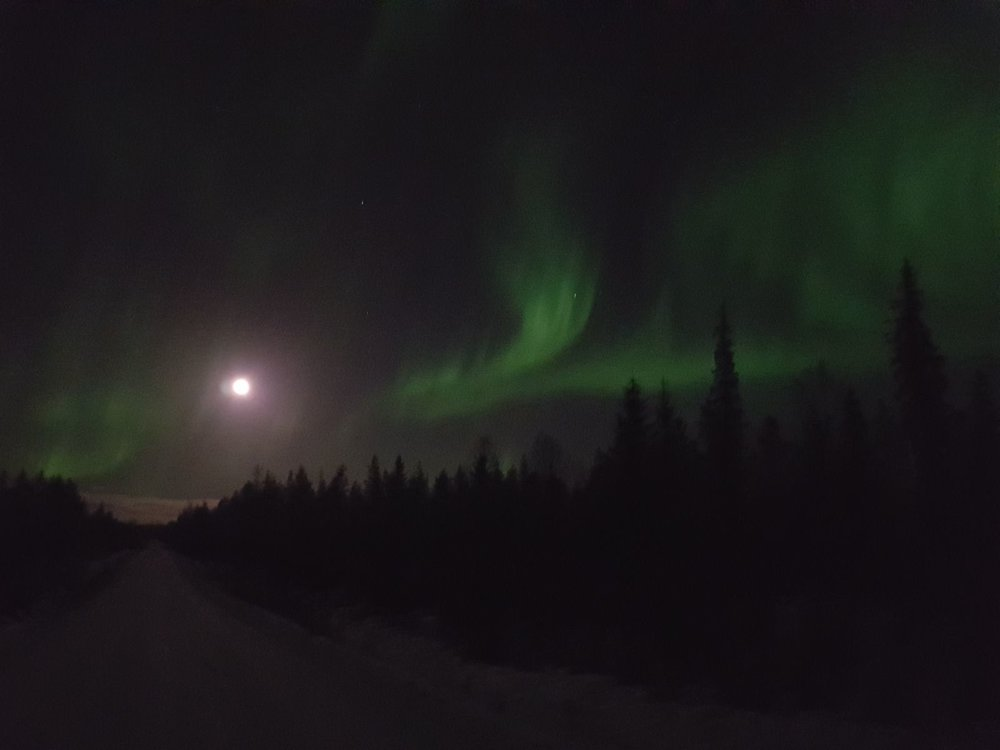 Aurora Borealis and forest