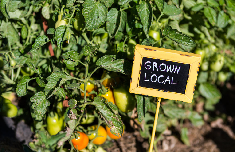 Natural Awakenings Dallas - Urban agricultural start-up Turn has launched a food waste pickup service for restaurants, businesses, special events and residents of Dallas, in zip codes 75204, 75206, 75214, 75218, 75223, 75228 and 75238. They can choose from three different subscription options or elect a one-time pickup of seasonal organic items. Read more...