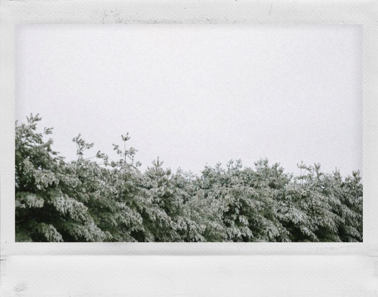 Snow Polaroid - 1