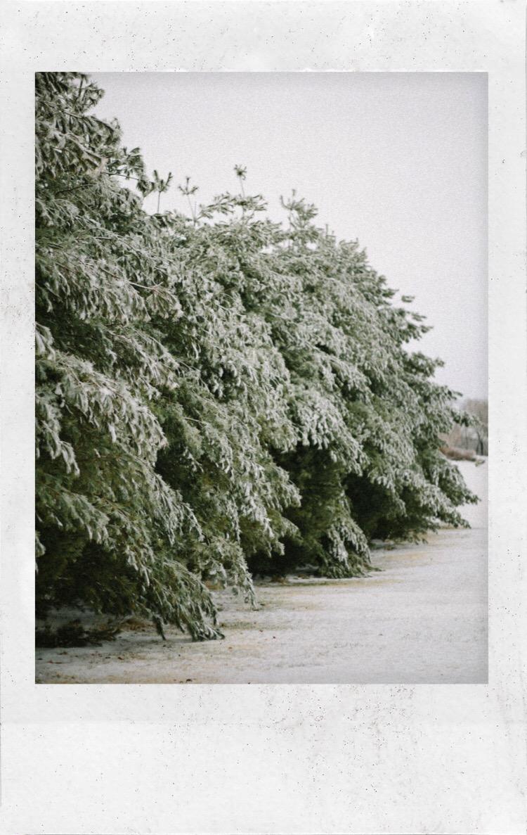 Snow Polaroid - 2