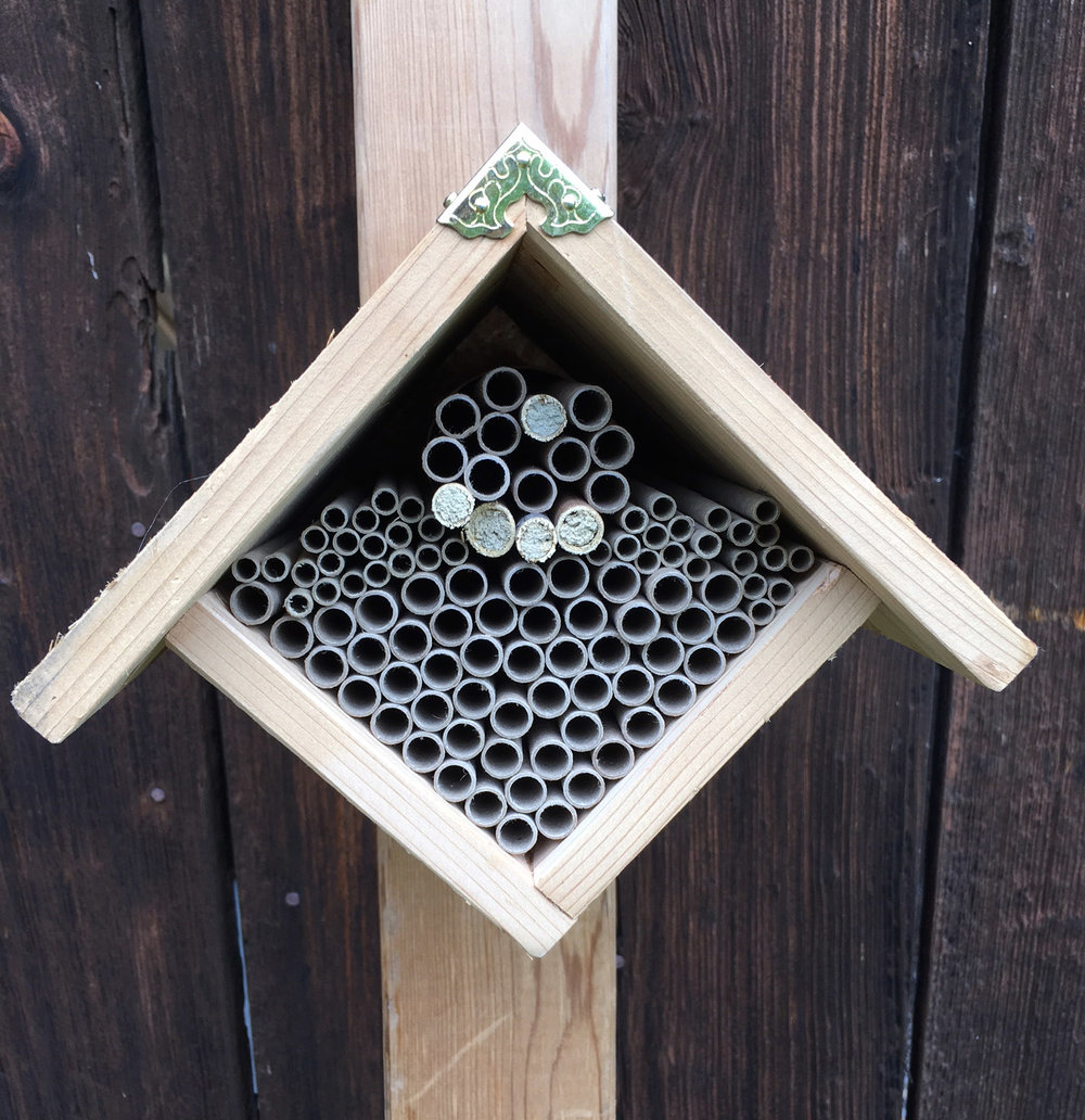 Mason bee house and tubes.jpg