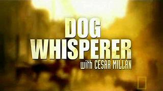 DogWhisperer_320.jpg