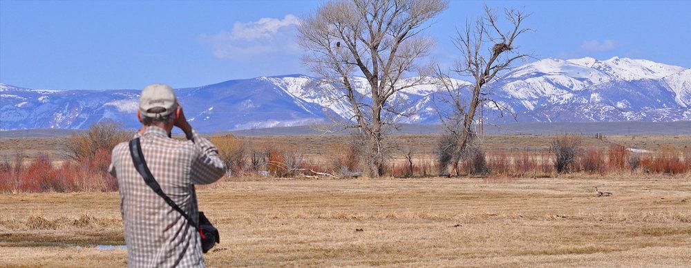 Bald Eagle Watch - Cit Sci Volunteer (near Barr Lake).jpg
