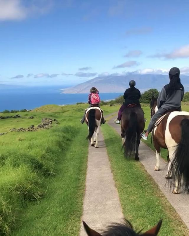 I just realized that I haven't gone horse riding since 2017 in Hawaii... we need to fix this. Where can I go in LA? It needs to be affordable lol😂....💭 can you imagine owning one😍🙉 yohhhhhhhh!