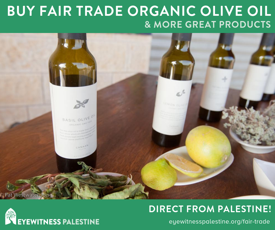 Social Ads - Olive Oil.png