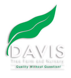 Davis Tree Farm & Nursery