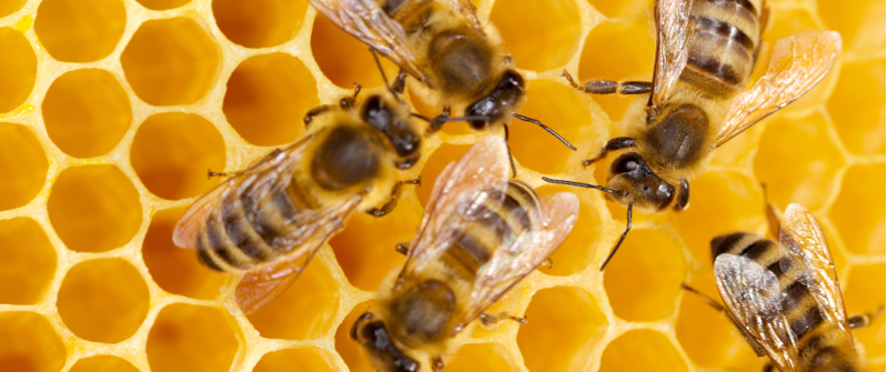 Small_bee-honeycomb.jpg