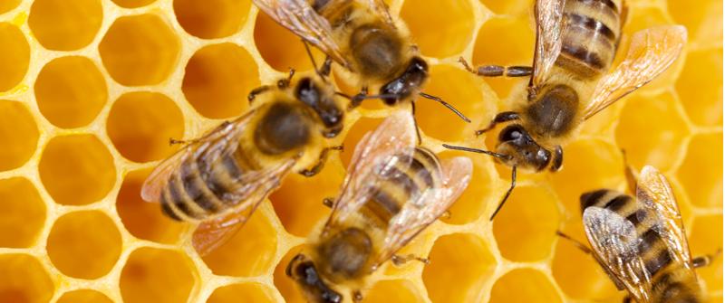 Small_bee-honeycomb.jpg