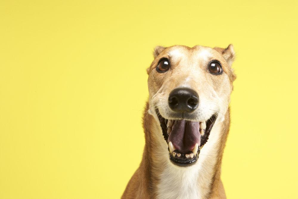 Greyhounds (5).jpg