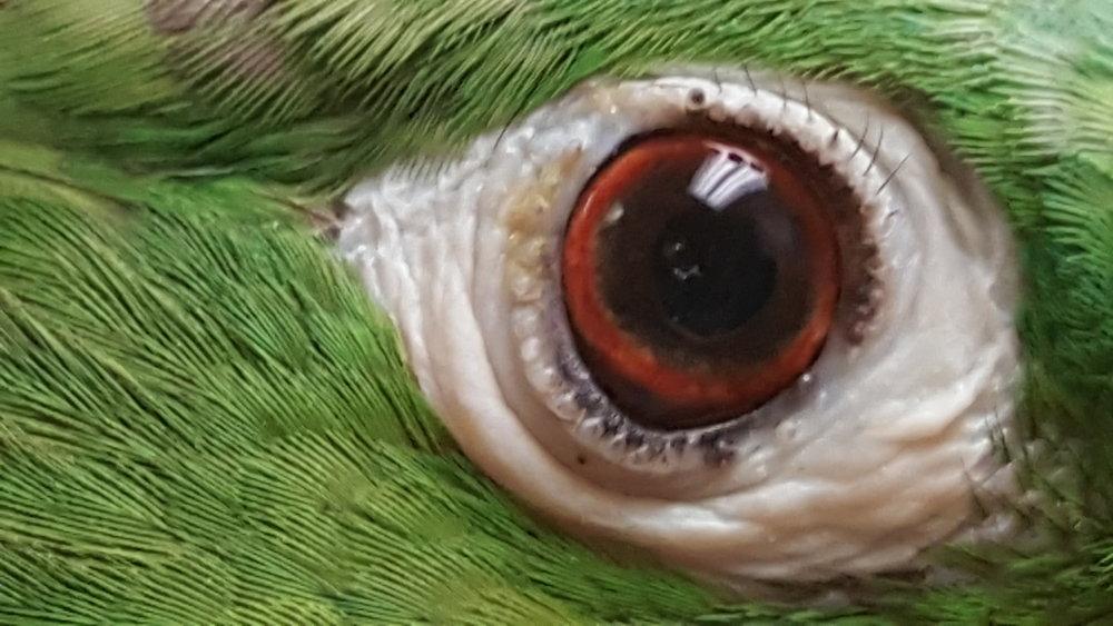 Right Eyelid