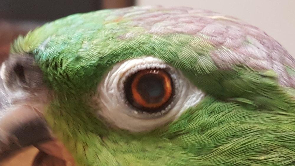 Left Eyelid