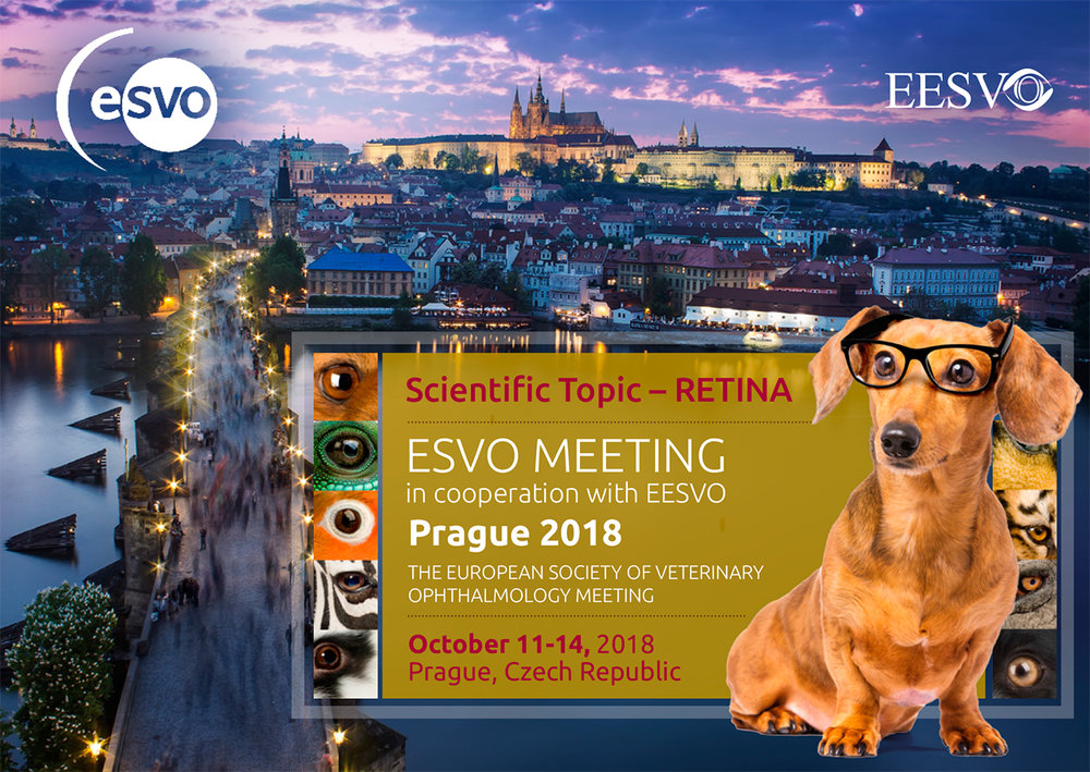 ECVO 2018 for ACVO.jpg