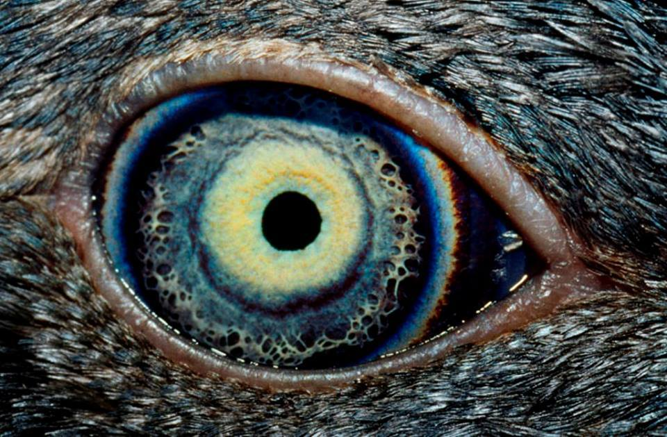 5-animal-eyes.jpg