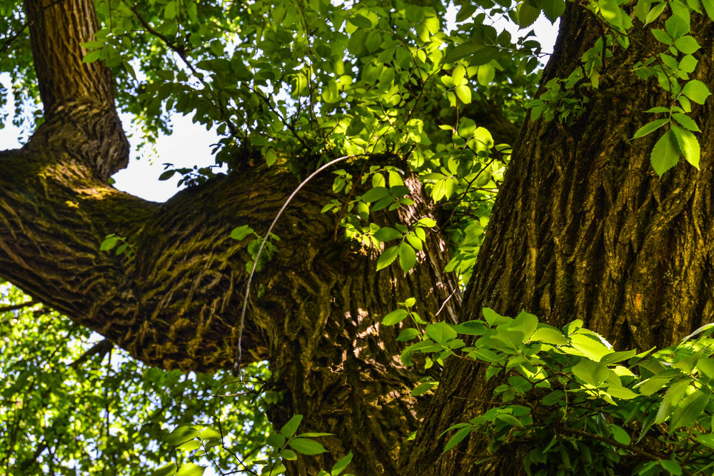 Tree by Nikki Lane