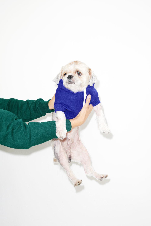 18-10-13 DOGS0832_cc.jpg