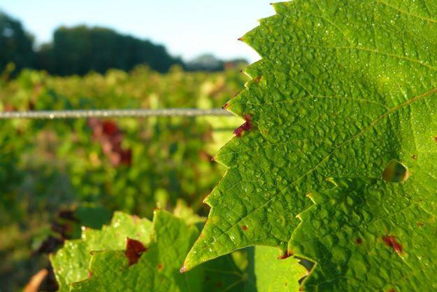 harvest-2014-leaves.jpg