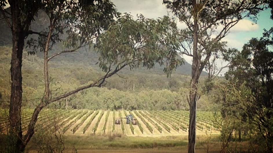 Brokenback Vineyard, Pokolbin, Hunter Valley