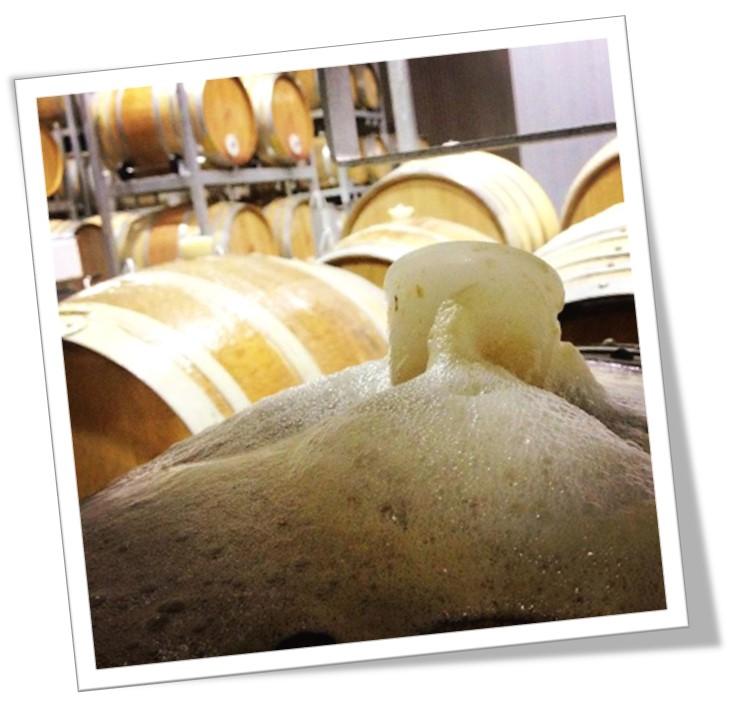 Wild yeast fermented Chardonnay