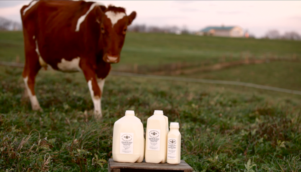 Woodbourne Creamery Milk with Cow.png