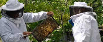 moco bees.jpg