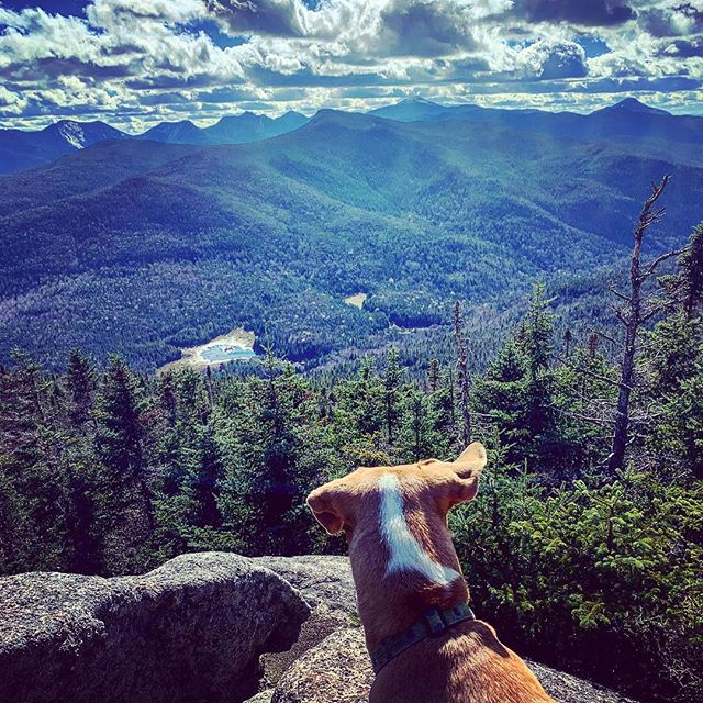 Up in the Adirondack air. I'd say Mac wins the pic of the day contest. . . . #portermountain #highpeaks #keenevalley #adirondacks #adks #lakeplacid #newyorktrails #hikeny #hikestyle #iloveny #visitadks #naturalny #upstateny #pureadirondacks #scenicny #mountains #discover #earthpix #mountainlife #adklife #northeast #hikelife #aspiring46er #hiking_daily  #dogsthathike #dogsofinstagram #getoutside #picoftheday