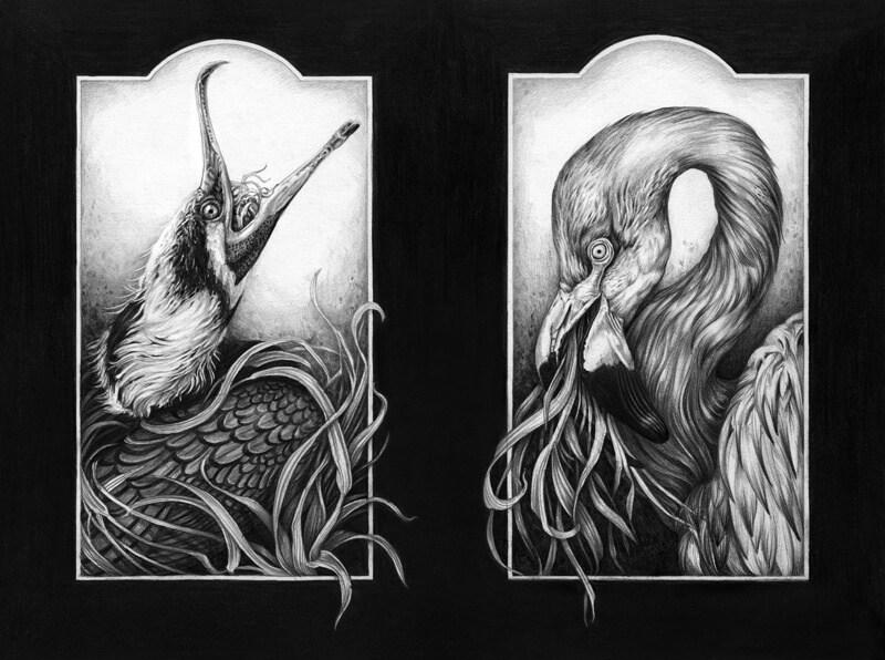 Cormorant-Flamingo-300.jpg