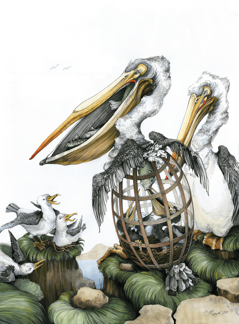 PELICANS 30×37 in. Ink, Marker, Watercolor. 2010. SOLD.