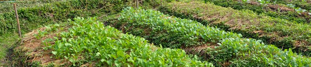 veggie garden.png