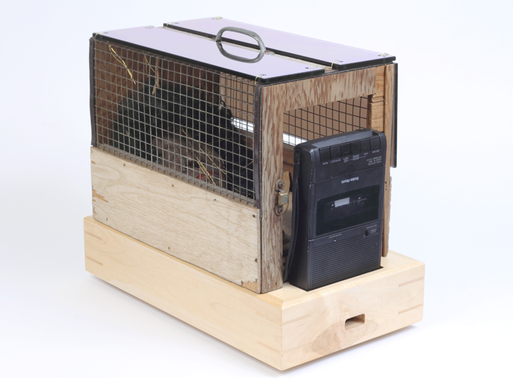 caged 1964.jpg