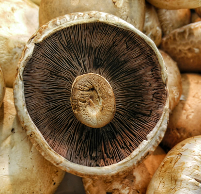 <p><strong>Monaghan Mushrooms</strong>Purchase of a minority stake<i>More →</i></p>