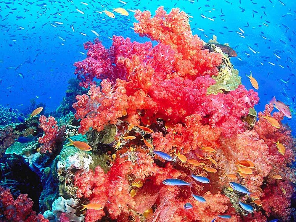 Coral-reef-14.jpg