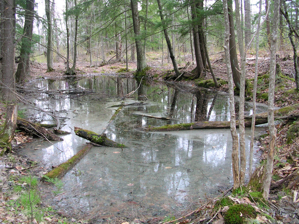 Vernal pools provide spring breeding habitat for several    amphibian species