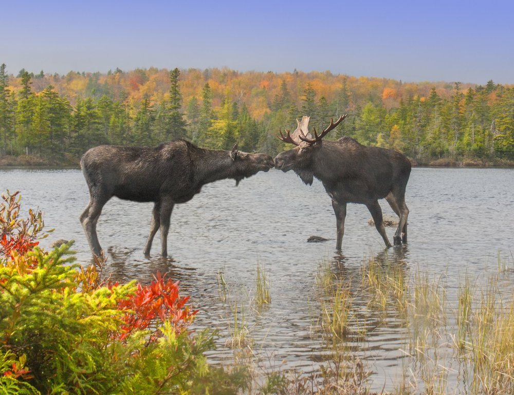 Fotolia-male female moose103870355-Subscription-Monthly-L copy.jpg