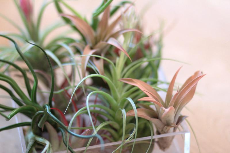 airplants0416.jpg