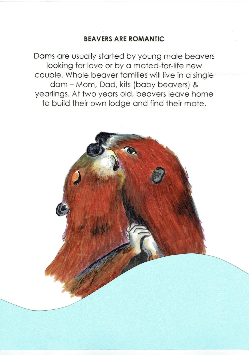 Beavers Are Romantic.jpg