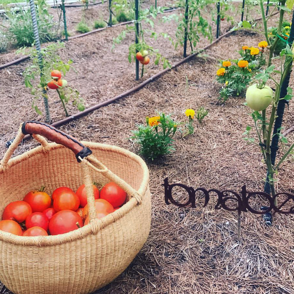 tomatoes-instar-farms.png