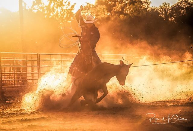 Healing.  Cowboy putting the second rope on a calf during team roping at a rodeo. . . . #westernlife #rurallife #fasthorses #rodeo #rodeolife #letsrope #teamroping #calfroping #cowboy #cowboylife #rodeophotography #rodeophotographer #rodeophotos #westernart #outwest #outwestcollection #ryanmcgehee