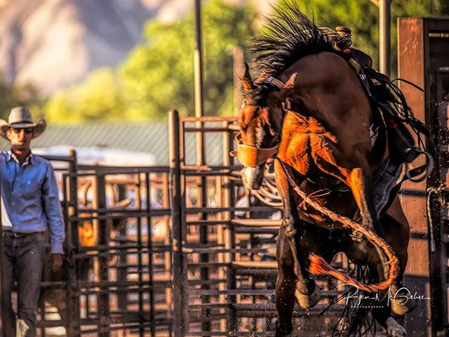 Me looking at life like, wow, that's brutal. 😉 . . . #cowboylife #rodeophotos #cowboy #outwest #rodeolife #buckinghorse #buckingbronco #rodeo #yeehaw