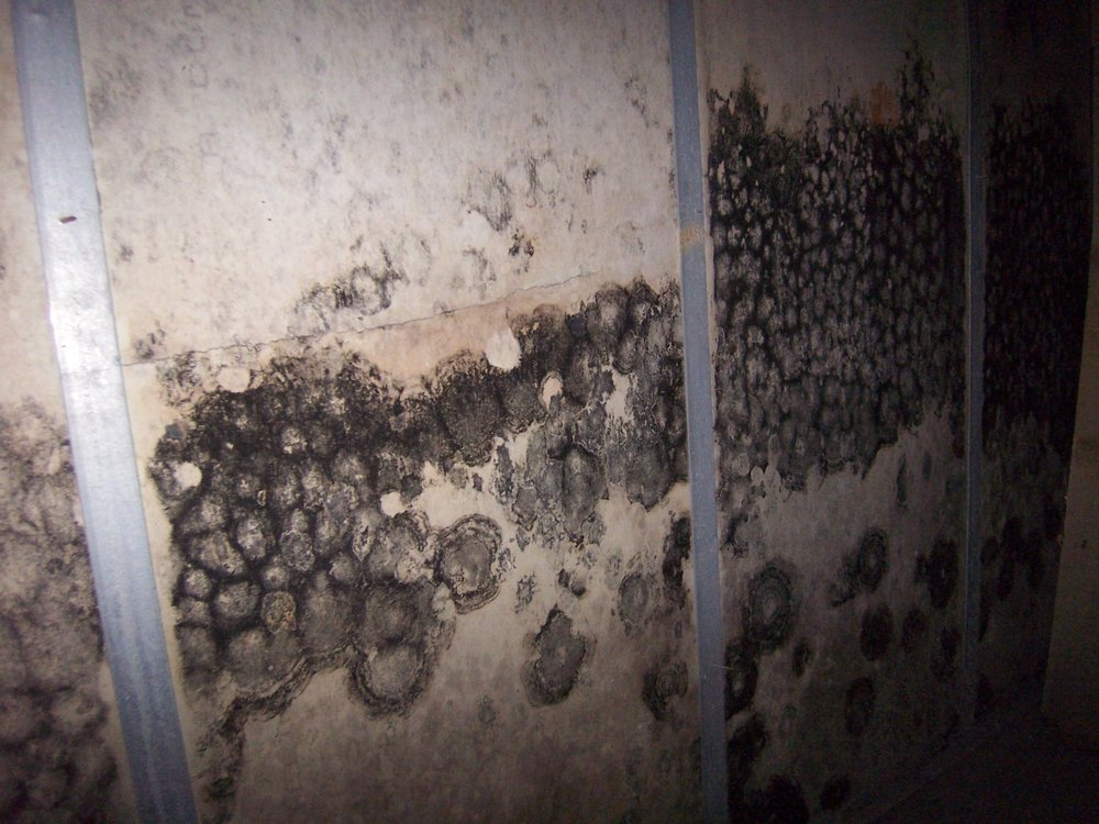*click for details on mold assessment services
